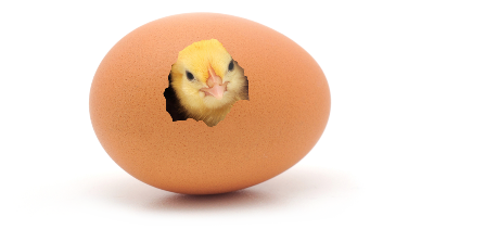 Baby Chick Peeping Out Of An Egg